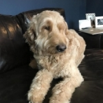 Oliver and the Bad Breath That Saved His Life